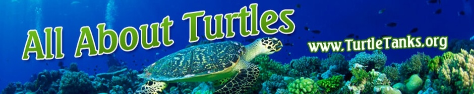 Turtle Tanks .org